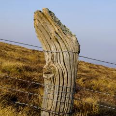 fence post on Foel Wen.jpg